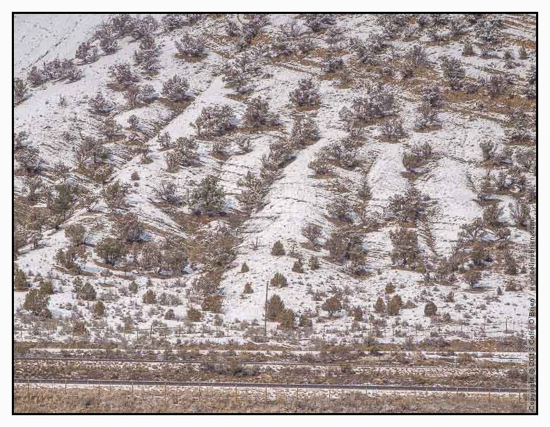 Photo of Hillside covered with snow turning to trees